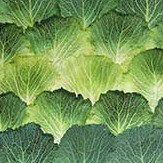 Mr Perswall Cabbage Mural - Product code: P193001-4
