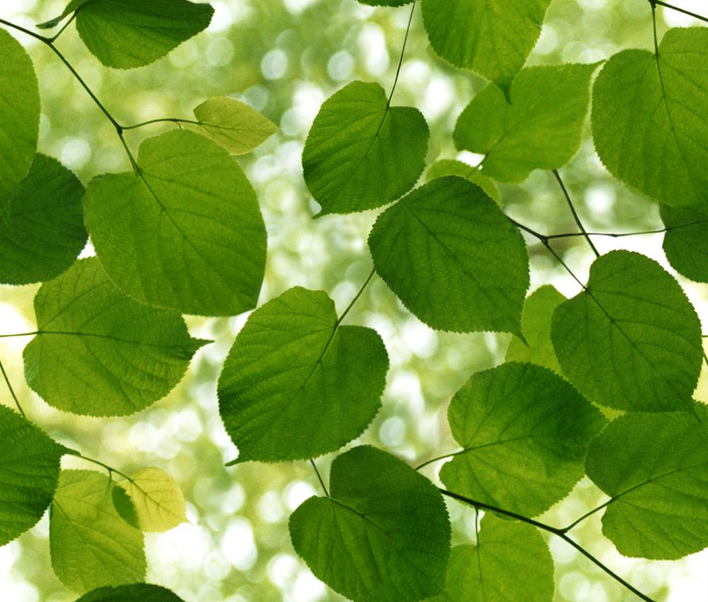 Ella Doran Sunlight Through Leaves Green and white Wallpaper main image