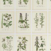 Sandberg Botanica Wallpaper