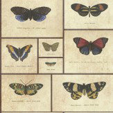 Graduate Collection Butterfly Print Natural World Wallpaper