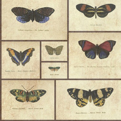 Image of Graduate Collection Wallpapers Butterfly Print Natural World, Butterfly Print