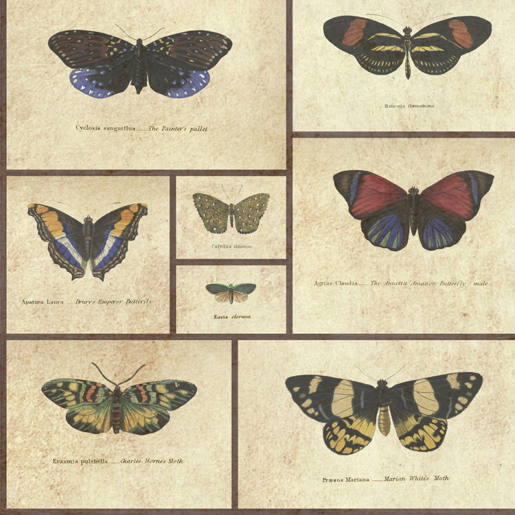 Graduate Collection Butterfly Print Natural World Neutral Wallpaper main image