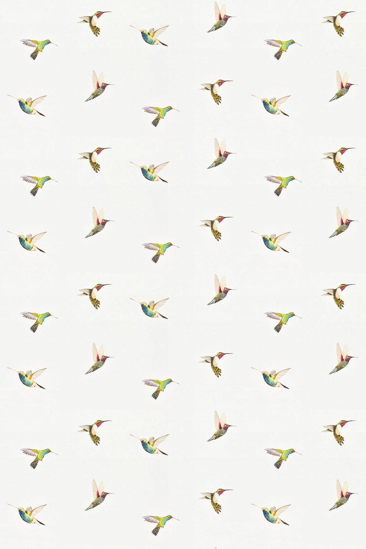 Amazilia By Harlequin Flamingo Papaya Apple Wallpaper