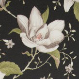 iliv Lilium  Ebony Wallpaper