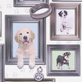 Albany Dog's Life Multi Wallpaper - Product code: 272703