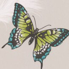 Albany Butterflies Grey & Green Wallpaper