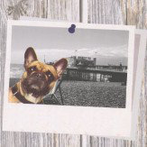 Albany Selfie Dogs Multi Wallpaper - Product code: 102558