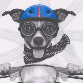 Albany Biker Dogs Multi Wallpaper