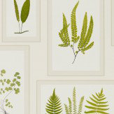 Sanderson Fern Gallery Ivory Wallpaper