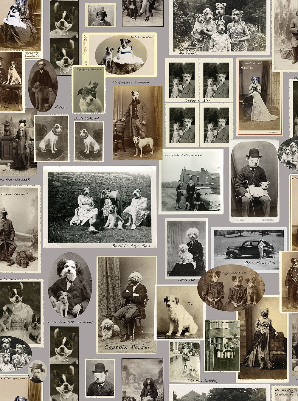 Graduate Collection Jollyboy & Friends Grey Wallpaper main image