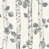 Albany Birchwood Charcoal Wallpaper