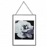 Arthouse Cabbage Rose Black / White Art - Product code: 004314