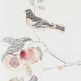 Sanderson Fruit Aviary Cream / Multi Wallpaper