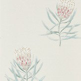 Sanderson Protea Flower Porcelain / Blush Wallpaper