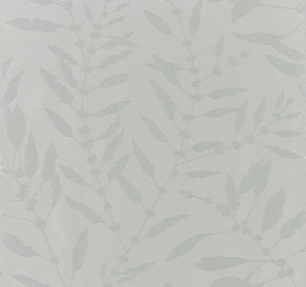 harlequin chaconia shimmer
