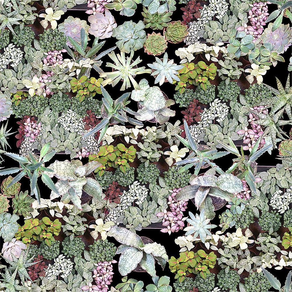 Ella Doran Surreal Succulents Green Wallpaper - Product code: Surreal Succulents