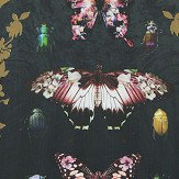 Arthouse Butterfly Framed Print Multi-coloured Art