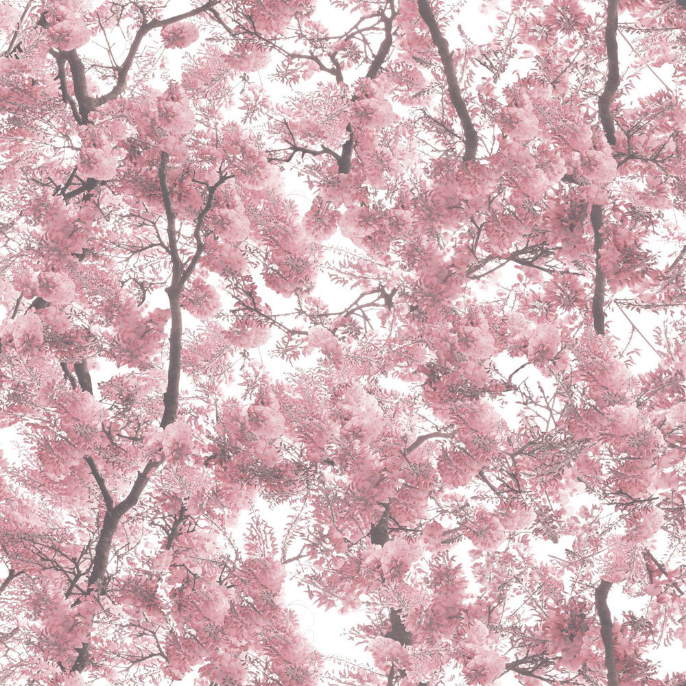 Albany Blossom Arbor Pink Wallpaper - Product code: L33103