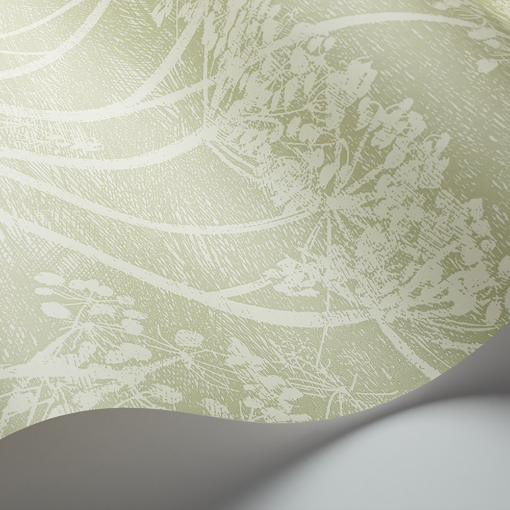 Cole & Son Cow Parsley Olive Green Wallpaper - Product code: 112/8029