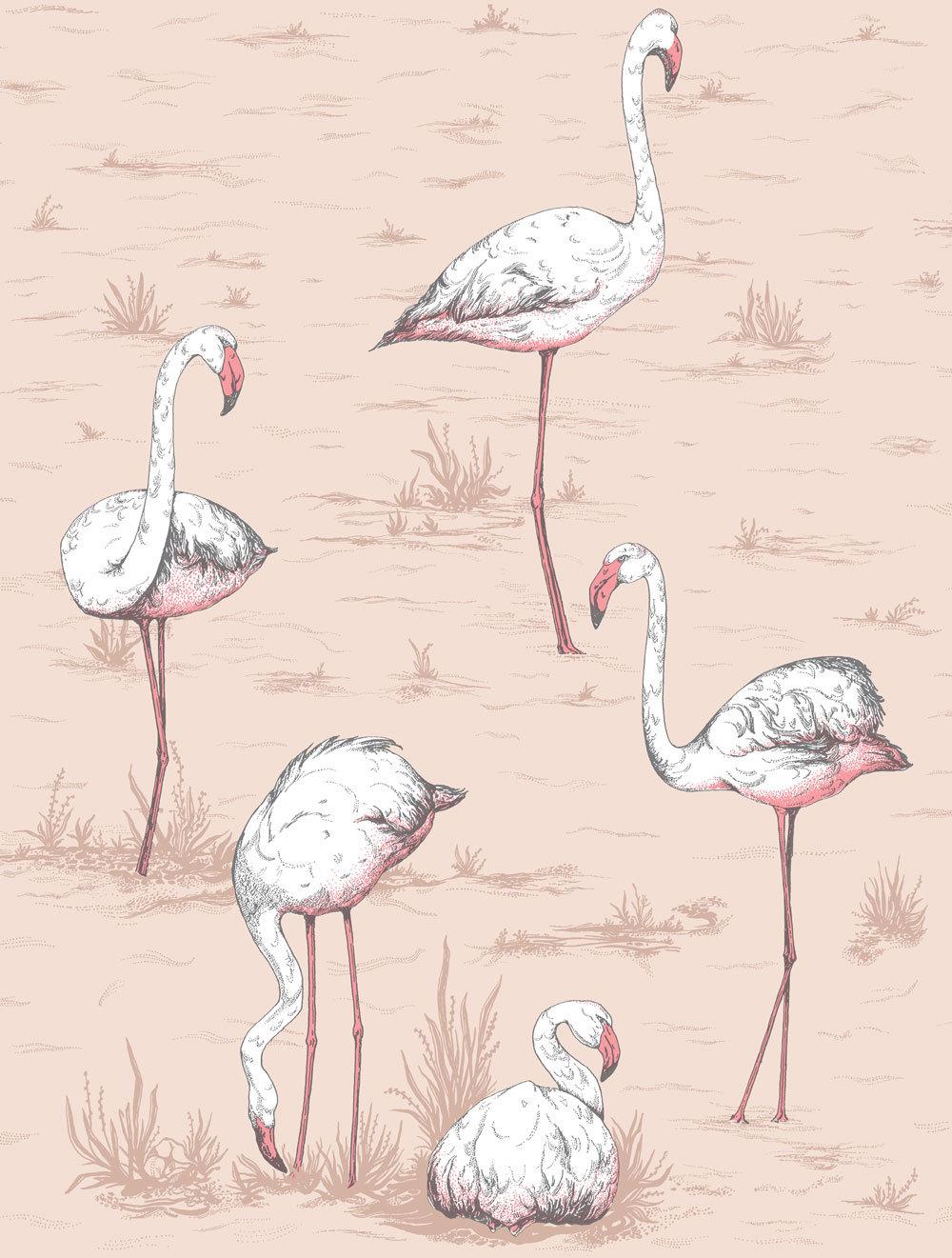 Cole & Son Flamingos Ballet Slipper Wallpaper main image