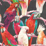 Albany Parrots Multi / Black Wallpaper