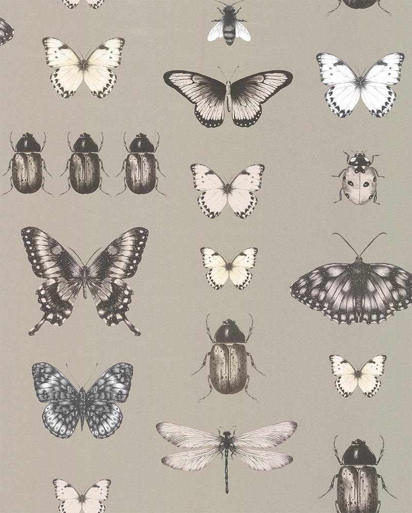 Clarke & Clarke Papilio Charcoal / Gold Wallpaper main image