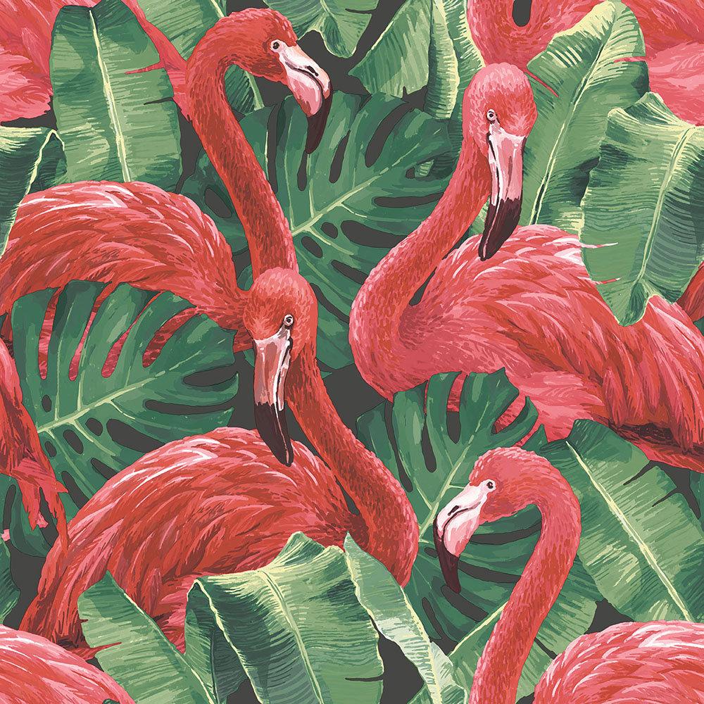 Galerie Flamingo Pink / Green / Black Wallpaper - Product code: G56405