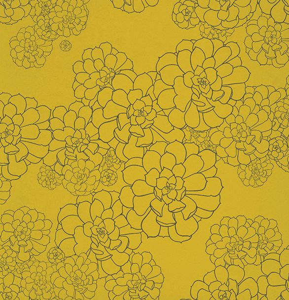 Paint & Paper Library Aeonium Yellow Wallpaper main image