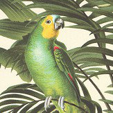 Albany Parrot Jungle Green Wallpaper