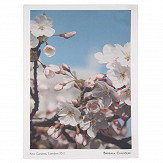 Brewers Home White Blossom Tea Towel - Product code: BC TT02 002