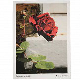 Brewers Home Rose Tea Towel - Product code: BC TT02 012