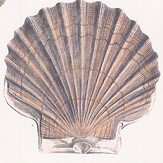 Designers Guild Captain Thomas Brown's Shells Oyster Wallpaper