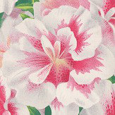 Designers Guild Variegated Azalea Wallpaper