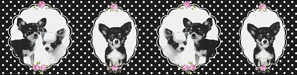 Little Stars Chihuahua Border - Black - by Albany