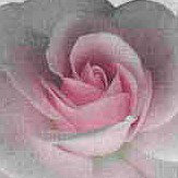 Vilber Roses Pink Wallpaper
