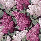 Cole & Son Lilac Grandiflora Magenta / Blush Wallpaper