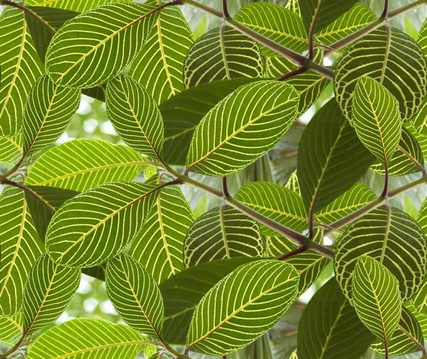 Ella Doran Safari Leaf Green Wallpaper main image