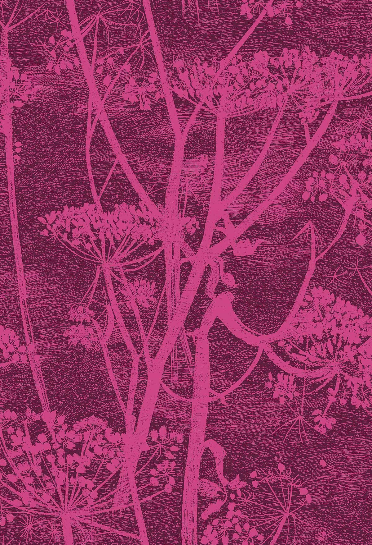 Cole & Son Cow Parsley Magenta Fabric - Product code: F111/5017
