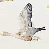 Sanderson Elysian Geese Silver / Chalk Fabric