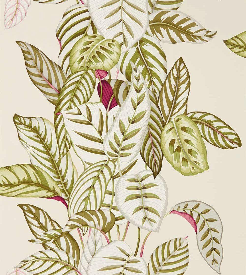Sanderson Calathea Olive Wallpaper - Product code: 216631
