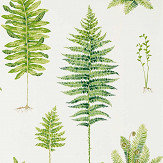 Sanderson Fernery Botanical Green Wallpaper