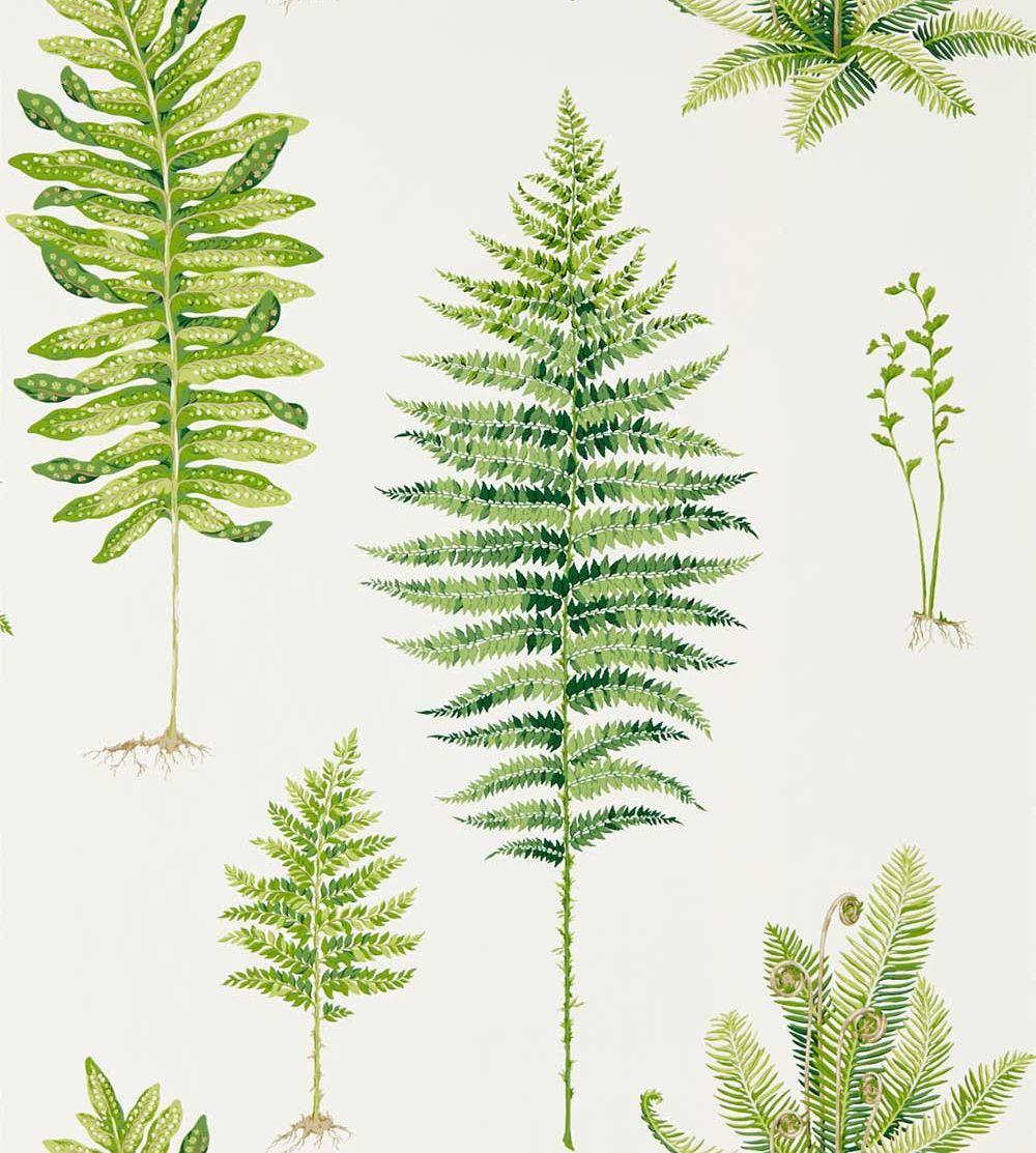 Sanderson Fernery Botanical Green Wallpaper main image