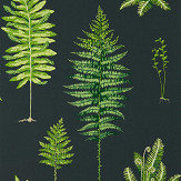 Sanderson Fernery Botanical Green / Charcoal Wallpaper