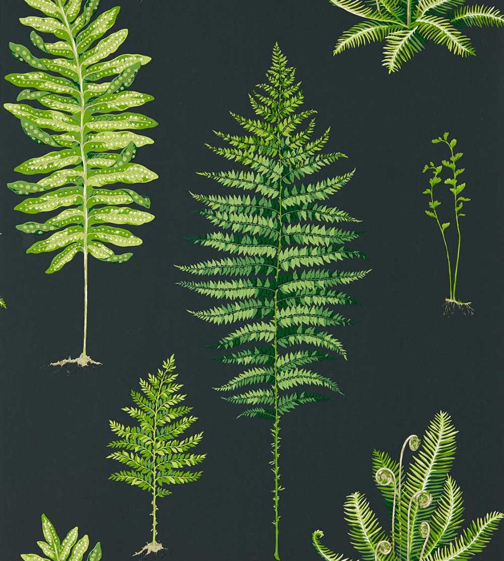 Sanderson Fernery Botanical Green / Charcoal Wallpaper main image