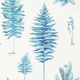 Sanderson Fernery China Blue Wallpaper