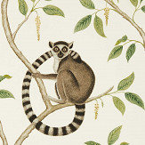 Sanderson Ringtailed Lemur Cream / Olive Wallpaper