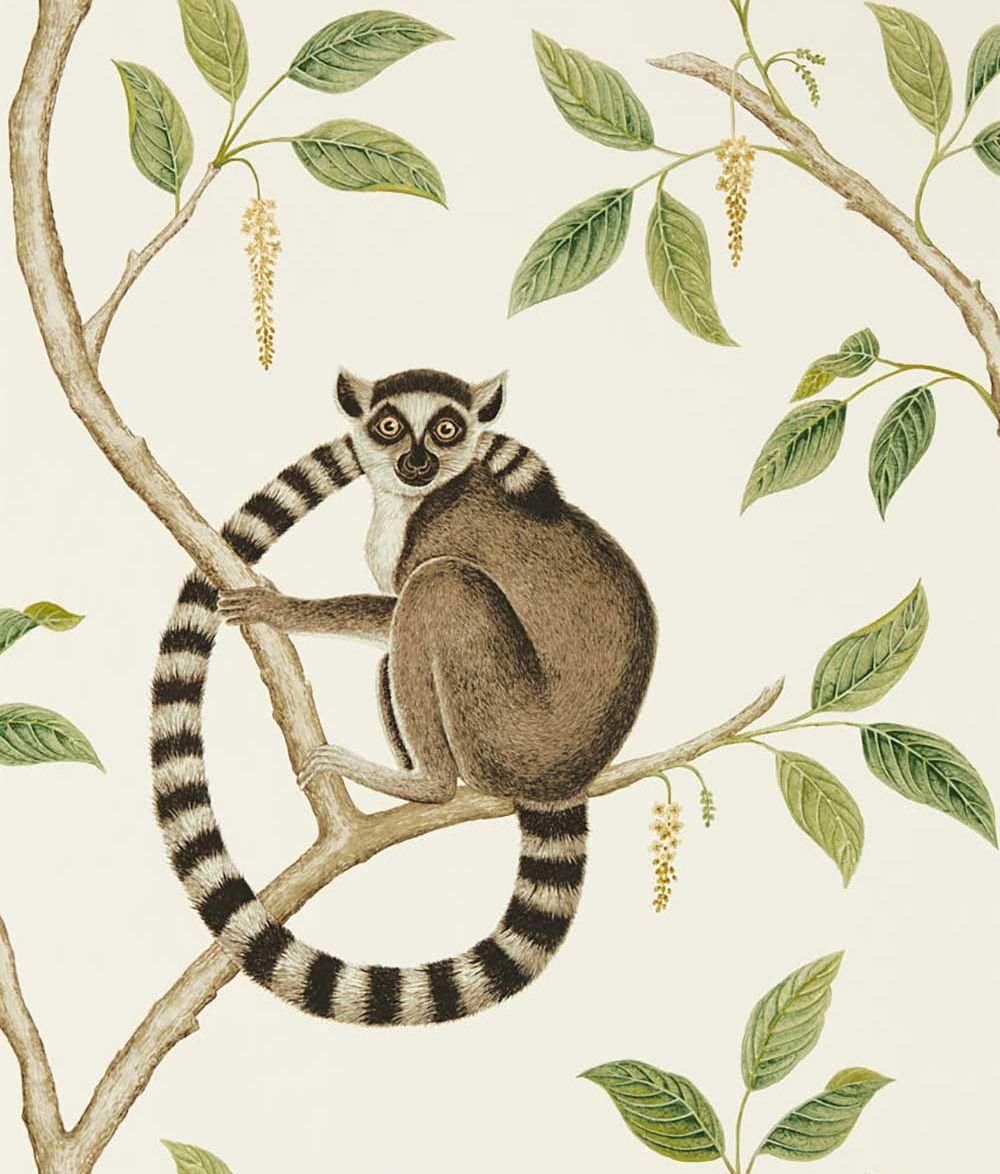 Sanderson Ringtailed Lemur Cream / Olive Wallpaper - Product code: 216664