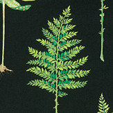 Sanderson Fernery Botanical Green / Charcoal Fabric - Product code: 226577