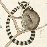Sanderson Ringtailed Lemur Grey Fabric - Product code: 226582