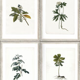 Mind the Gap Botany White Mural - Product code: WP20153